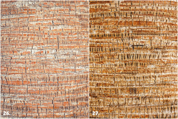 29 Palm Bark Textures Graphic Textures By Textures - Image 12