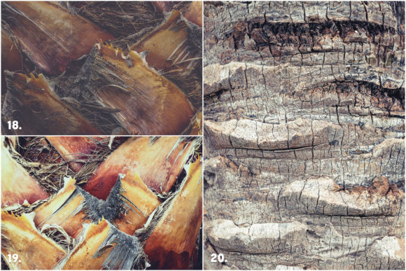 29 Palm Bark Textures Graphic Textures By Textures - Image 9