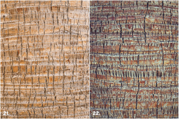 29 Palm Bark Textures Graphic Textures By Textures - Image 10