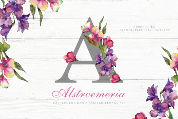 Print on Demand: Alstroemeria Watercolor Graphic Illustrations By MyStocks