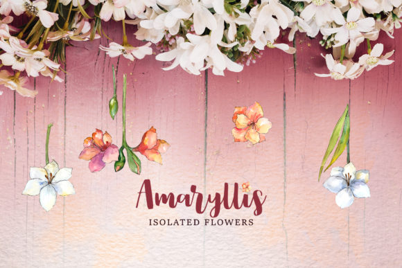 Print on Demand: Amaryllis Flowers Watercolor Png Graphic Illustrations By MyStocks - Image 2