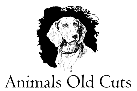 Print on Demand: Animals Old Cuts Dingbats Font By Intellecta Design - Image 5