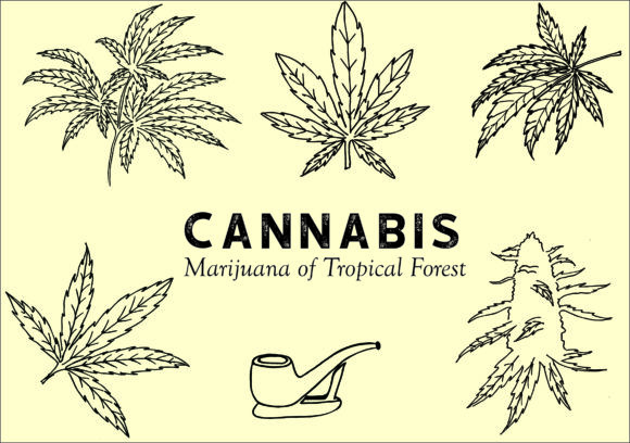 Cannabis of Tropical Forest Graphic Crafts By DNS2011