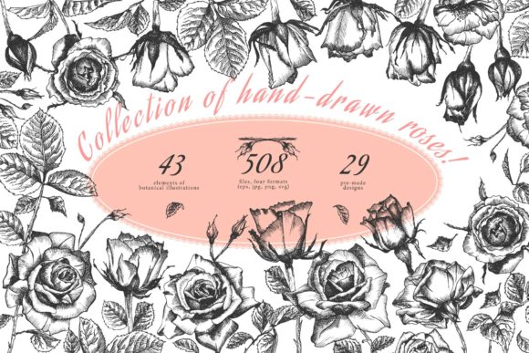 Print on Demand: Hand Drawn Sketch Roses Graphic Illustrations By z.zajka