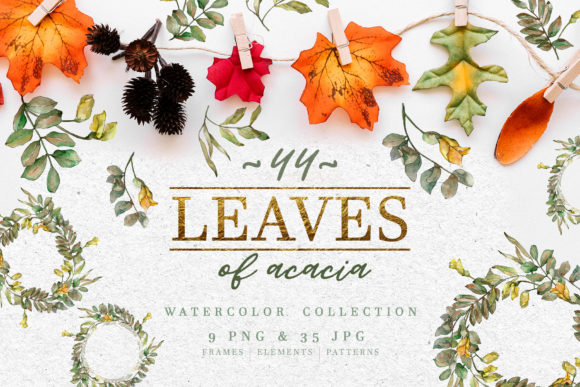 Print on Demand: Leaves of Acacia Watercolor Png Graphic Illustrations By MyStocks
