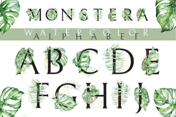 Monstera Watercolor Black Alphabet Graphic Illustrations By EvgeniiasArt