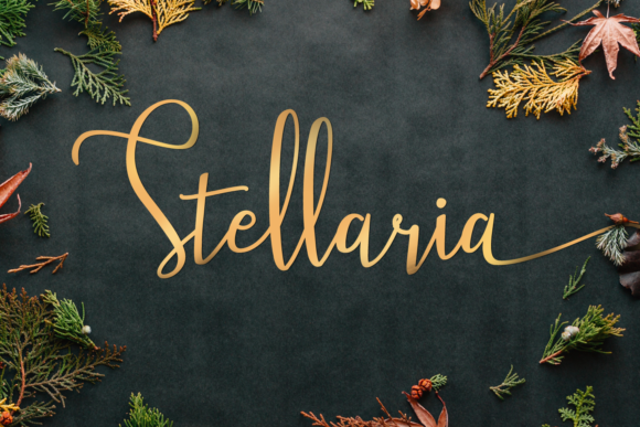Stellaria Font By TapaType Image 9