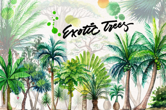 Watercolor Exotic Trees Graphic Illustrations By Graphobia