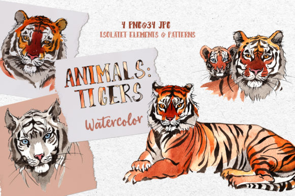 Print on Demand: Animals: Tigers Watercolor Png Graphic Illustrations By MyStocks