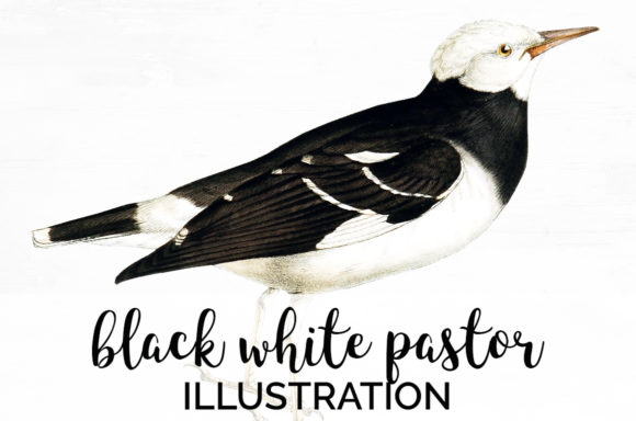 Black White Pastor Graphic Illustrations By Enliven Designs