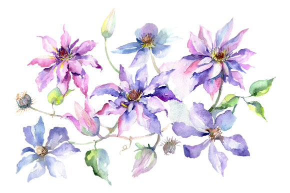 Print on Demand: Branch of Gentle Purple Flowers Watercolor Graphic Illustrations By MyStocks
