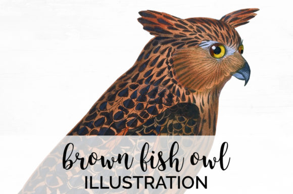 Brown Fish Owl Graphic Illustrations By Enliven Designs