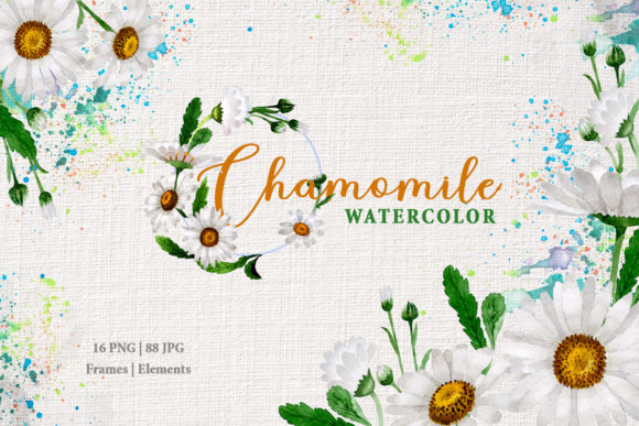 Print on Demand: Chamomile Watercolor Graphic Illustrations By MyStocks