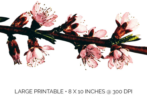 Crosby Peach Blossom Graphic Illustrations By Enliven Designs - Image 3
