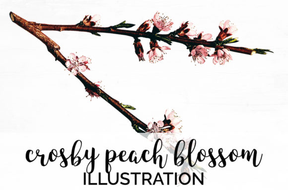 Crosby Peach Blossom Graphic Illustrations By Enliven Designs
