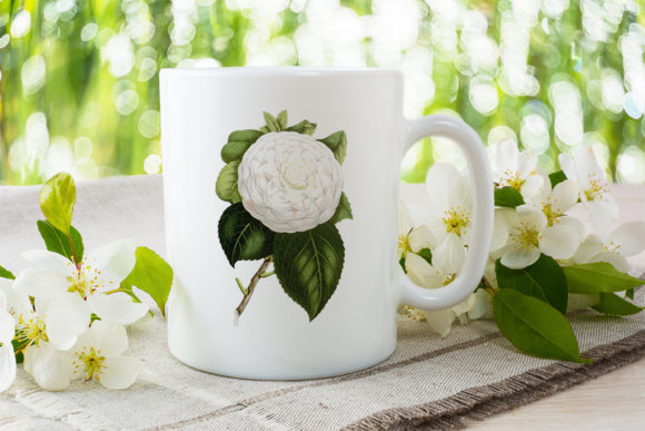Cup of Beauty Camellia Graphic Illustrations By Enliven Designs - Image 2