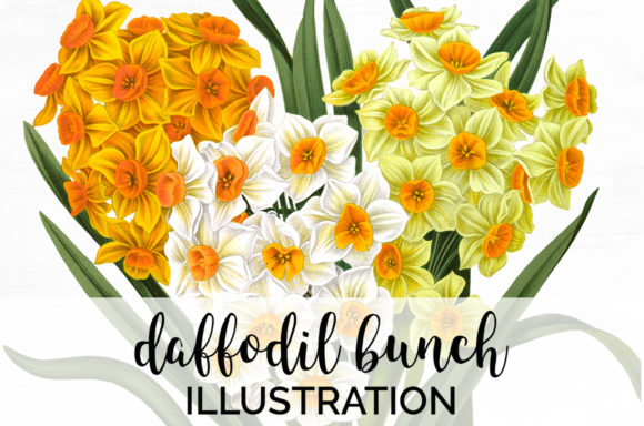 Daffodil Bunch Graphic Illustrations By Enliven Designs