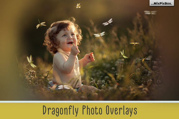 Print on Demand: Dragonfly Photo Overlays Graphic Layer Styles By MixPixBox