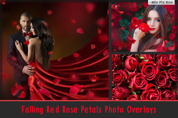 Print on Demand: Falling Rose Petals Photo Overlays Graphic Layer Styles By MixPixBox