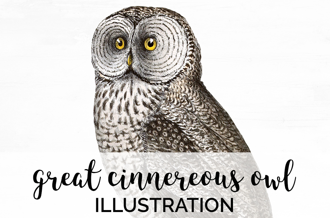 Download Free Great Cinnereous Owl Graphic By Enliven Designs Creative Fabrica for Cricut Explore, Silhouette and other cutting machines.