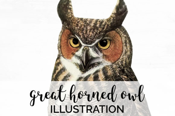 Great Horned Owl Graphic Illustrations By Enliven Designs