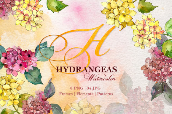 Print on Demand: Hydrangeas Yellow-pink Watercolor Png Graphic Illustrations By MyStocks