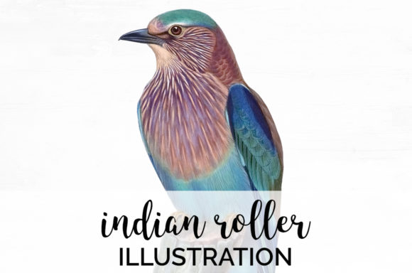Indian Roller Graphic Illustrations By Enliven Designs