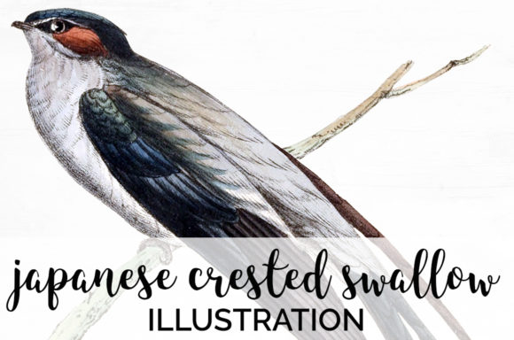 Japanese Crested Swallow Graphic Illustrations By Enliven Designs