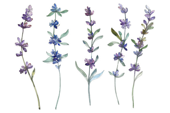 Print on Demand: Lavender Watercolor Graphic Illustrations By MyStocks