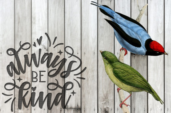 Long Tailed Manakin Graphic Illustrations By Enliven Designs - Image 2