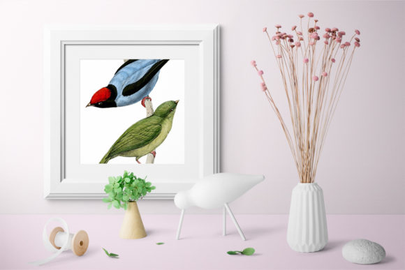 Long Tailed Manakin Graphic Illustrations By Enliven Designs - Image 4