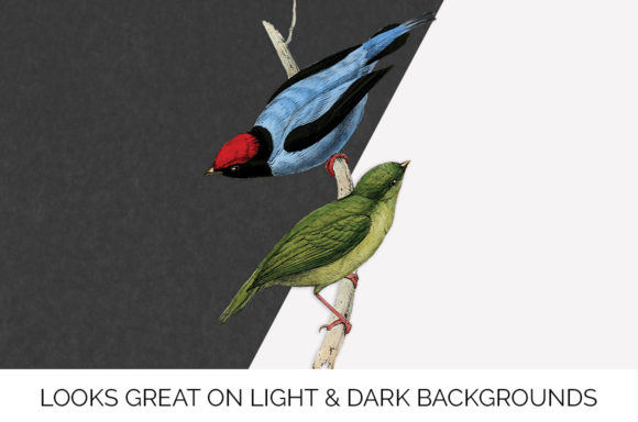 Long Tailed Manakin Graphic Illustrations By Enliven Designs - Image 5