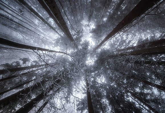 Look Up in the Winter Forest Graphic Photos By Aleš Krivec