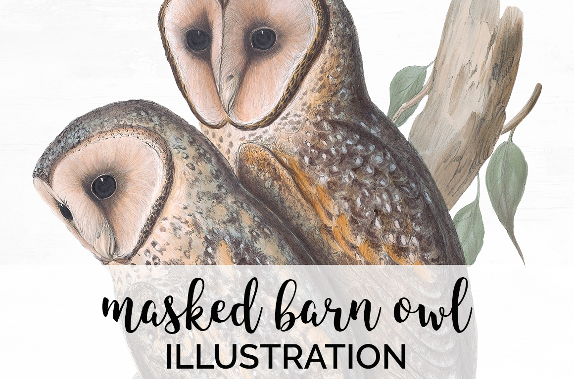 Download Free Masked Barn Owl Graphic By Enliven Designs Creative Fabrica for Cricut Explore, Silhouette and other cutting machines.