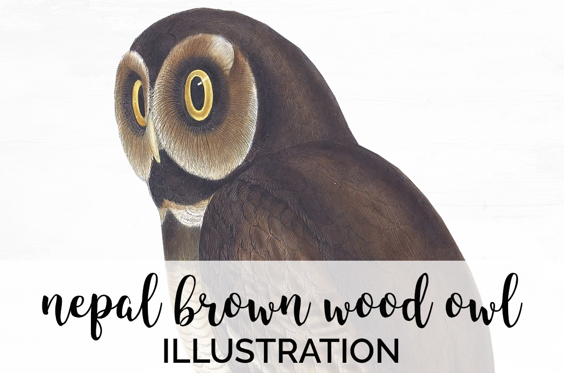 Download Free Nepal Brown Wood Owl Graphic By Enliven Designs Creative Fabrica for Cricut Explore, Silhouette and other cutting machines.