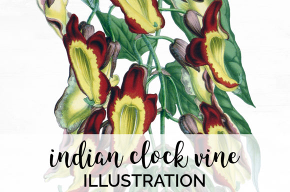 Ondian Clock Vine Graphic Illustrations By Enliven Designs