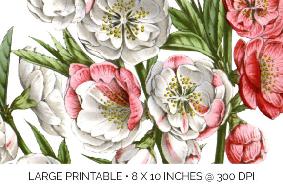 Peach Blossom Graphic Illustrations By Enliven Designs - Image 3