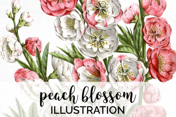 Peach Blossom Graphic Illustrations By Enliven Designs
