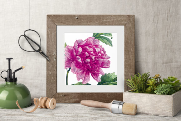 Pink Mountain Peony Graphic Illustrations By Enliven Designs - Image 4