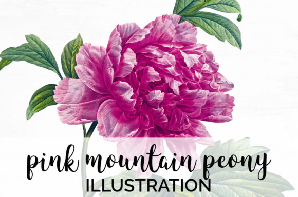 Pink Mountain Peony Graphic Illustrations By Enliven Designs - Image 1