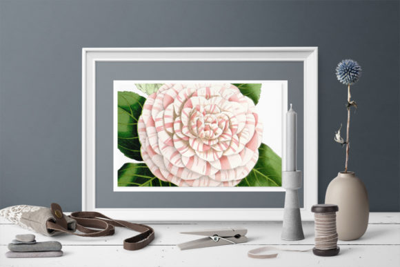 Princess Frederick William Camellia Graphic Illustrations By Enliven Designs - Image 2