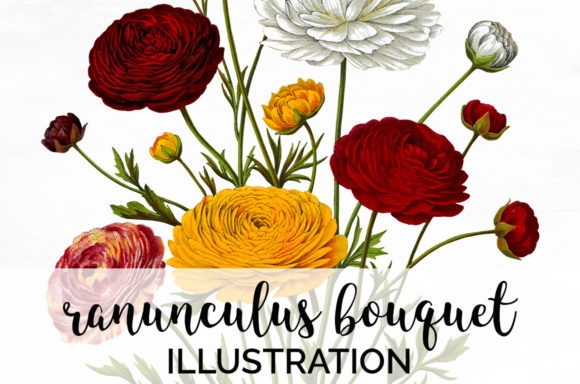 Ranunculus Bouquet Graphic Illustrations By Enliven Designs
