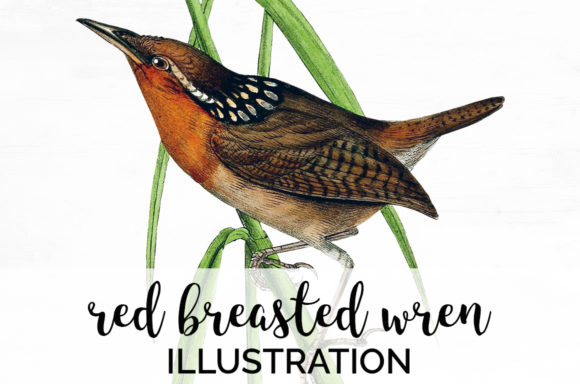 Download Free Red Breasted Wren Graphic By Enliven Designs Creative Fabrica for Cricut Explore, Silhouette and other cutting machines.
