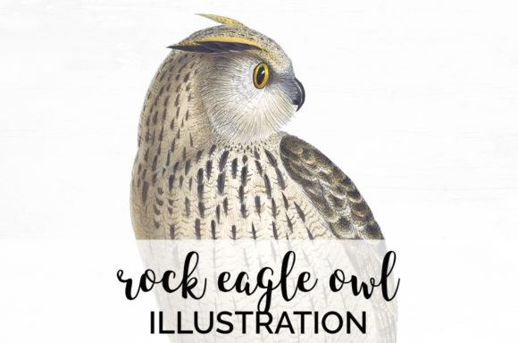Rock Eagle Owl Graphic Illustrations By Enliven Designs