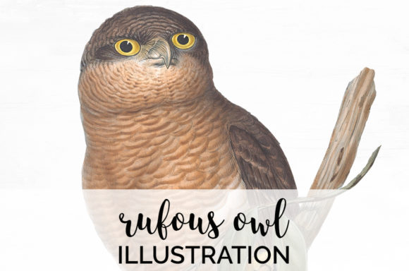 Rufous Owl Graphic Illustrations By Enliven Designs