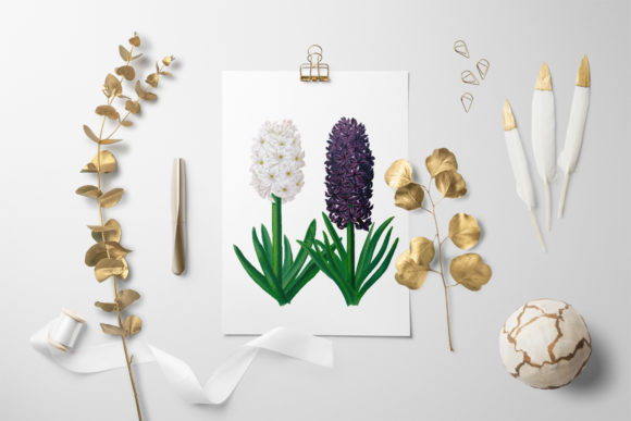 Snowball Haydn Hyacinths Graphic Illustrations By Enliven Designs - Image 2