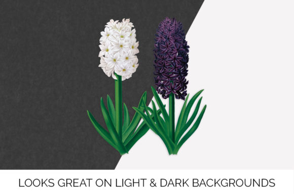 Snowball Haydn Hyacinths Graphic Illustrations By Enliven Designs - Image 5