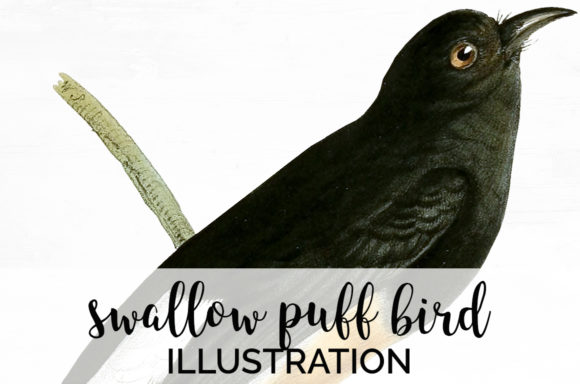 Swallow Puff Bird Graphic Illustrations By Enliven Designs