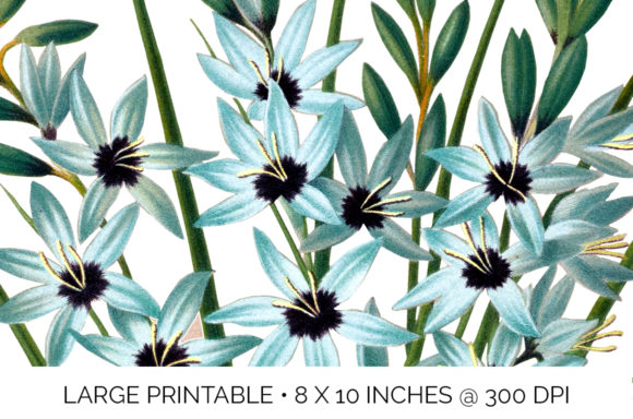 Turquoise Ixia Graphic Illustrations By Enliven Designs - Image 3