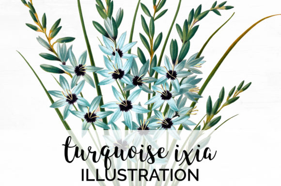 Turquoise Ixia Graphic Illustrations By Enliven Designs